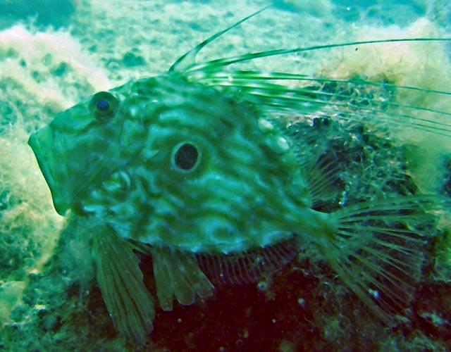 nurkowanie wrakowe w Chorwacji, wraki Adriatyku