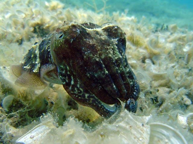 diving croatia nurkowanie w chorwacji