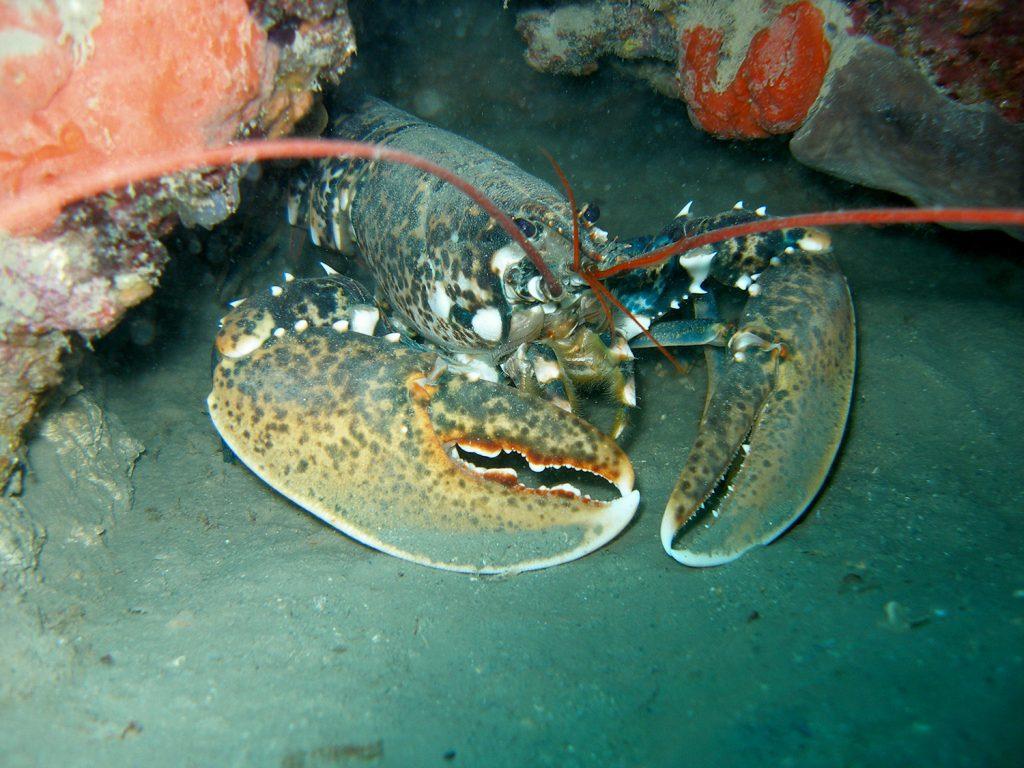 nurkowanie wrakowe Chorwacja, wrak Baron Gautsch, wraki w Chorwacji